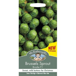 Mr.Fothergill's Brussels Sprout Brodie F1 Seeds
