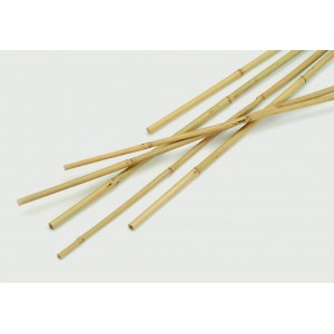 Apollo Bamboo Canes Pack 10