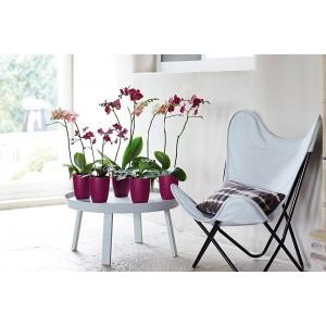 Elho Orchid Pot Cover 12.5cm